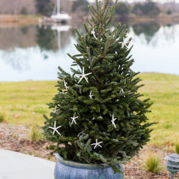 coastal haven design | coastalhavendesign.com | outdoor holiday decor