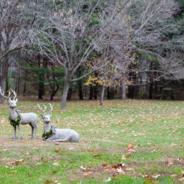 coastal haven design | coastalhavendesign.com | outdoor holiday deer statue decor
