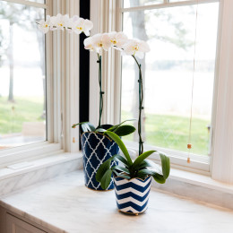 coastal haven design | coastalhavendesign.com | window sill flowers
